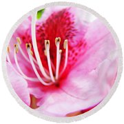 Pink Rhodie Flowers Art Prints Canvas Rhododendrons Baslee Troutman Round Beach Towel