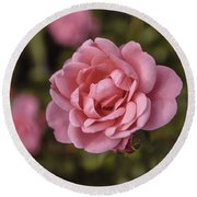 Pink Rose Instagram Round Beach Towel
