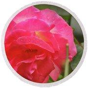 Pink Rose Round Beach Towel by Kelly Hazel