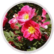 Pink Rose Of Sharon Blooms      Spring     Indiana Round Beach Towel