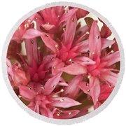 Pink Sedum Flower Macro Round Beach Towel
