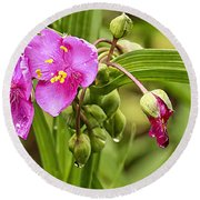 Pink Spiderwort Drip Drops Round Beach Towel