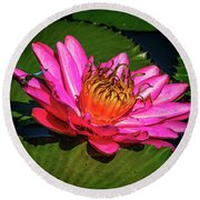 Pink Summer Water Lily Round Beach Towel