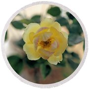 Pink Tipped Yellow Rose Round Beach Towel