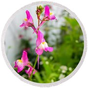 Pink Toadflax Round Beach Towel