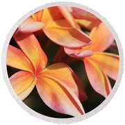 Pink Tropical Plumeria Makawao Maui Hawaii Round Beach Towel