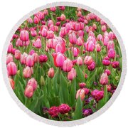 Pink Tulips At Floriade In Canberra, Australia Round Beach Towel