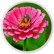 Pink Zinnia Bee Round Beach Towel