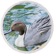 Pintail Portrait Round Beach Towel