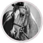 Pinto Pony Portrait Black And White Round Beach Towel