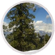 Pinus Tress  Round Beach Towel