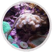 Pipe Fish And Sea Anemone  Round Beach Towel