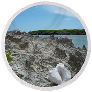 Plant And Shell On A Dominican Shore Round Beach Towel