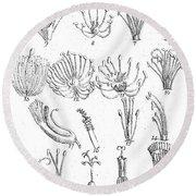 Plant Sexual Systems, Carl Linnaeus Round Beach Towel