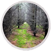 Planted Spruce Forest Round Beach Towel