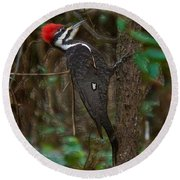 Plastic Wrapped Pileated Woodpecker Round Beach Towel