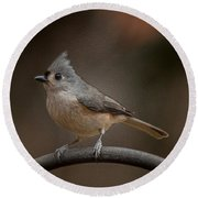 Plastic Wrapped Titmouse Round Beach Towel