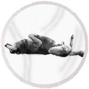 Playful Gray Wolf Photo Round Beach Towel