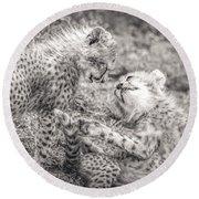 Playtime In Africa- Cheetah Cubs Acinonyx Jubatus Round Beach Towel