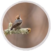 Please Stop The Rain - Brown-headed Nuthatch Round Beach Towel