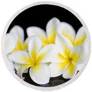 Plumeria Obtusa Singapore White Round Beach Towel