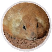 Plump Resting Prairie Dog Laying Down Round Beach Towel