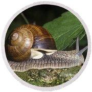 Pneumostome Of A Burgundy Snail Round Beach Towel