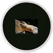 Pointy Teeth Round Beach Towel