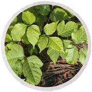 Poison Oak Vine - Toxicodendron Round Beach Towel