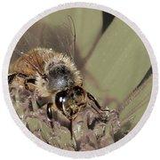 Pollinating Bee Round Beach Towel