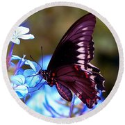 Polydamas Swallowtail Butterfly Round Beach Towel