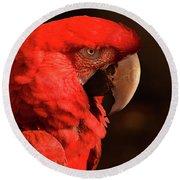 Pondering Parrot Round Beach Towel