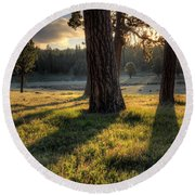 Ponderosa Pine Meadow Round Beach Towel