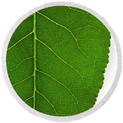 Poplar Leaf A Key To Biofuels Round Beach Towel