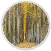Poplar Tree Farm In Boardman Oregon In Fall Closeup Round Beach Towel