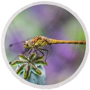 Poppy And The Dragonfly Round Beach Towel