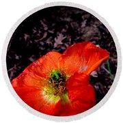 Poppy At Dusk Round Beach Towel