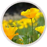 Poppy Flower Meadow 11 Poppies Art Prints Canvas Framed Round Beach Towel