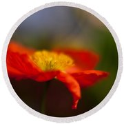 Poppy Resplendent Round Beach Towel