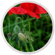 Poppy's Course Of Life Round Beach Towel