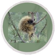 Porcupine Tree Round Beach Towel