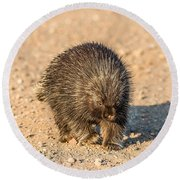 Porcupine Walking Round Beach Towel