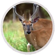Portrait Of A Beautiful Buck  Round Beach Towel