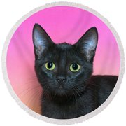Portrait Of A Black Kitten Round Beach Towel
