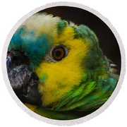 Portrait Of A Blue-fronted Parrot Round Beach Towel