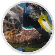 Portrait Of A Duck Round Beach Towel