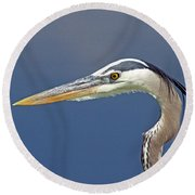 Portrait Of A Great Blue Heron Round Beach Towel