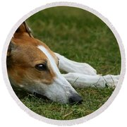 Portrait Of A Greyhound - Soulful Round Beach Towel