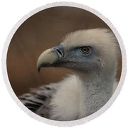 Portrait Of A Griffon Vulture Round Beach Towel