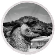 Portrait Of A Llama Mafia Leader Round Beach Towel
